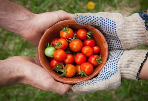 gardening-forum-01